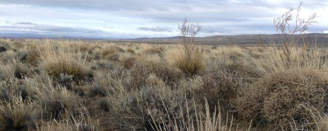 Estepa Patagónica Norte en invierno, Pilcaniyeu, Río Negro (Pablo Tittonell)