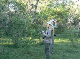 Monitoreo de aves, Entre Ríos (Noelia Calamari)